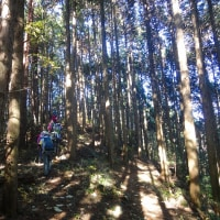 21 極楽寺山(693m:廿日市市)登山(続き)  路を横断して
