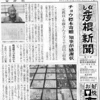 布藤美之さんのチョウ標本琵琶湖博物館に納まる