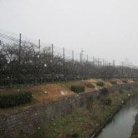 2月11日瑞穂公園テニスコートは雪の中の死闘