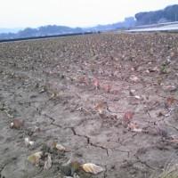 雨が降ってくれー!;農家の悲痛な叫び