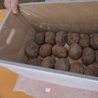 「山の芋収穫感謝祭」を開催いたしました!
