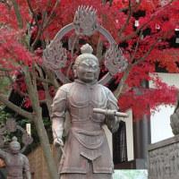 鎌倉の長谷寺は紅葉のみごろ