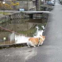 今日の散歩 藍場川  やっぱり猫が好き