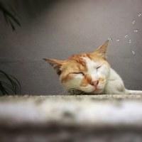 猫ブーム、消えて無くなる写真集