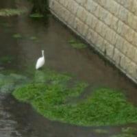 石神井公園です🍃