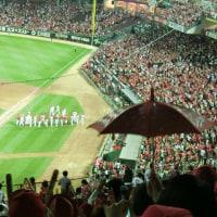(フアン3号)  昨日もマツダスタジアムへ野球見に行きました!