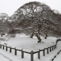 雪の天狗シデ