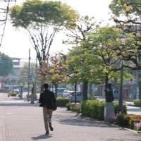 駅前通り 彫刻とハナミズキと人々<エッセイ風>