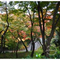 京都 2016 秋 4