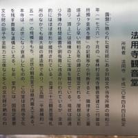 福島県会津三里町、法用寺の虎の尾桜です!!