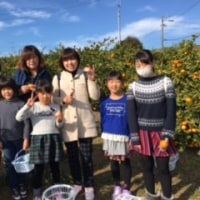 12月3日も晴天でミカン園もおお賑わいでした(^^)