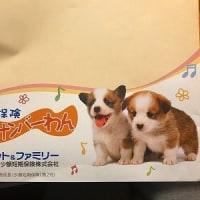 愛犬免許証♪