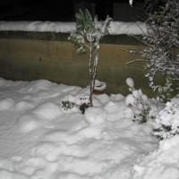 1/23 22時10センチ超えの積雪