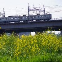 東急8500系と黄色い花