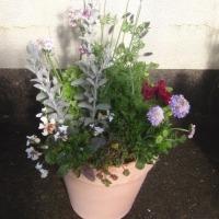 3月の教室は春の寄せ植え
