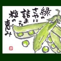 サヤ(絵手紙)