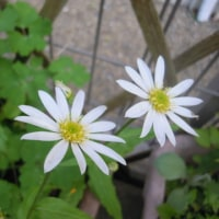 ウエルカム路の花たち