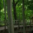 初夏。福島市民家園(2017.7.2)その2 ザクロの花
