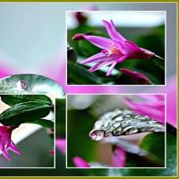 イ-スタ-カクタスの花