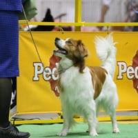 FCI Japan  international dog show 2017