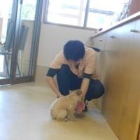 わんちゃんご紹介(5/15~5/21)