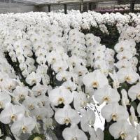 温室内は花盛り!