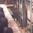 車庫の中にブドウ畑