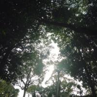 花咲く 公園