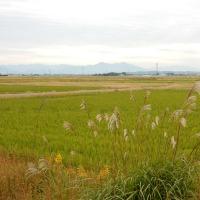 横越の田んぼ