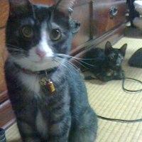 子猫預かり日記:さびちゃん、まだ居ます(笑)