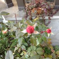 今日の花壇
