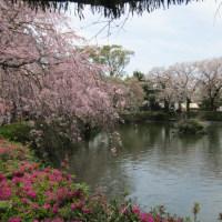 桜見ドライブ伊豆編