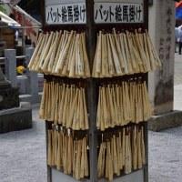 2017/04 東松山 箭弓神社ぼたんまつり