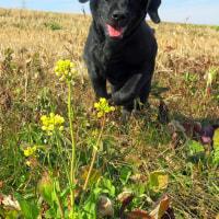 ☆☆☆ 子犬たちとジェイクを連れて北風の吹く土手で遊ぶ~木曜日・・・