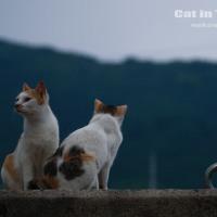 楽園のネコ受難 違法トラバサミ被害相次ぐ(広島・鞆の浦)