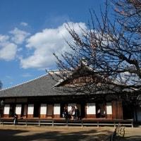 水戸弘道館の梅木
