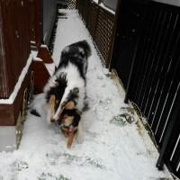 朝から雪。。。