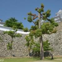 世界文化遺産・国宝姫路城(5)