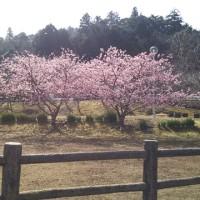 早春の亀山