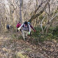 角田山 ゆきわり草 ■2017_3_18