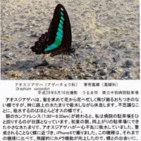 平成29年年賀状ブログ展  安次嶺馨先生 医師