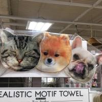 犬、猫の顔タオル