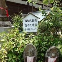海住山寺に登りました。