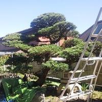 庭木を考える