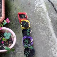 雨上がりの朝と植物達