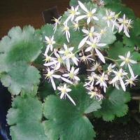 今日の花々