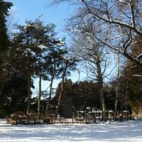 本日の下根子桜(1/19)