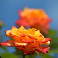 オータムローズウイーク ~長居植物園