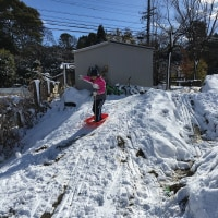 雪☆   No.1660