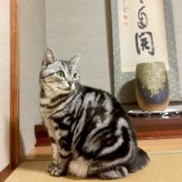 猫らしい写真
